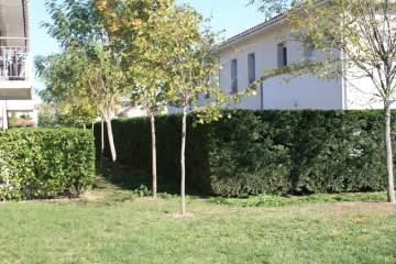 L'entretien de vos espaces verts sur la région de Toulouse